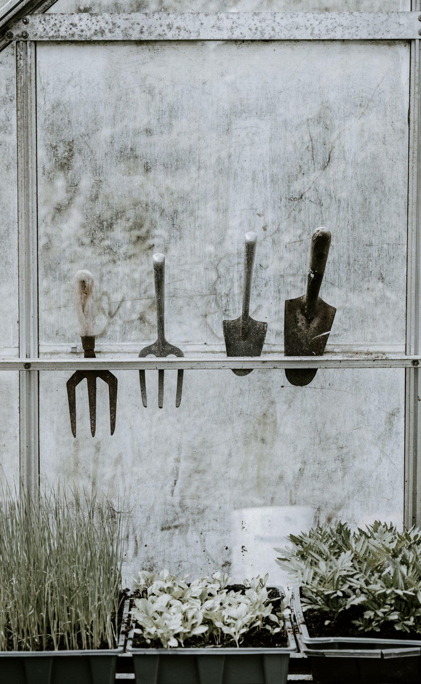common gardening mistakes to avoid